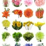 A Rainbow of Affordable Wedding Flowers