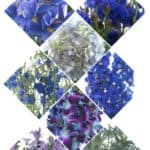 Affordable Blue Flowers for Your Wedding