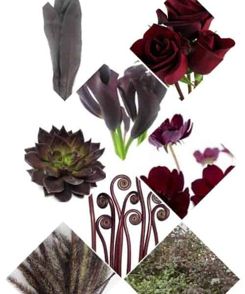 Affordable Black Flowers for Your Wedding