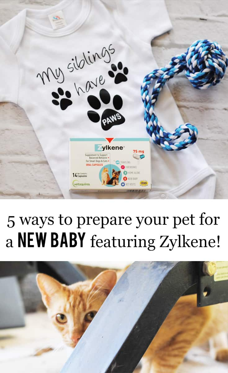 5 Ways to Prepare Your Pet For a New Baby featuring Zylkene #ad #ZylkeneDifference #MyHappyPets