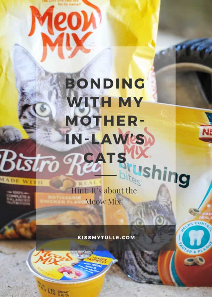 Bonding with My Mother-In-Law's Cats Over Meow Mix #ad